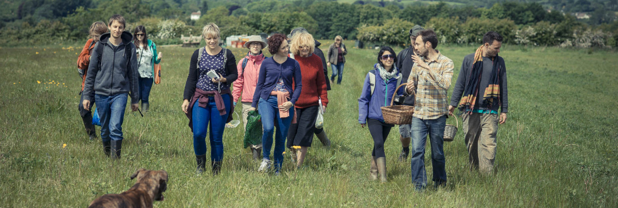 Wild food foraging walks and courses: mushroom hunts, hedgerow & seashore walks